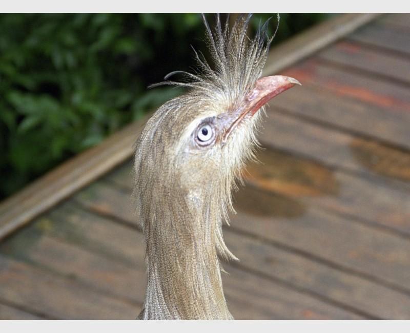 Bird face, aviary at Iguaçu - Brazil, 1996