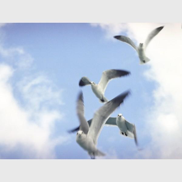 Seagulls after feeding - I - Nassau, The Bahamas, 1997