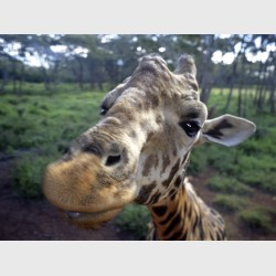"""Close-up"" - Kenya, 1997"