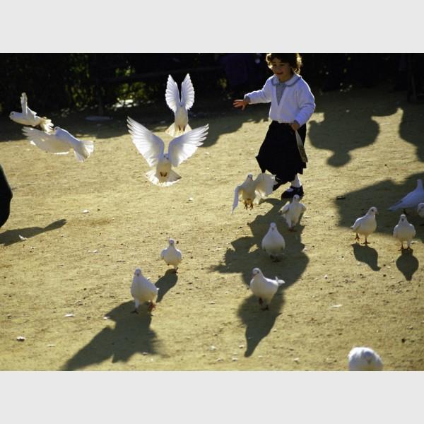 Doves and girl in the park - I - Seville, Spain, 2001