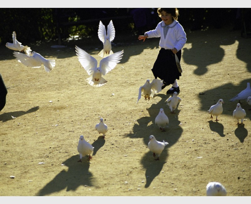 Doves and girl in the park - I - Seville, Spain, 2001