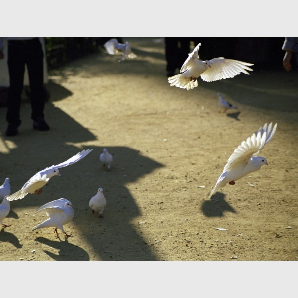 Doves and girl in the park - II - Seville, Spain, 2001