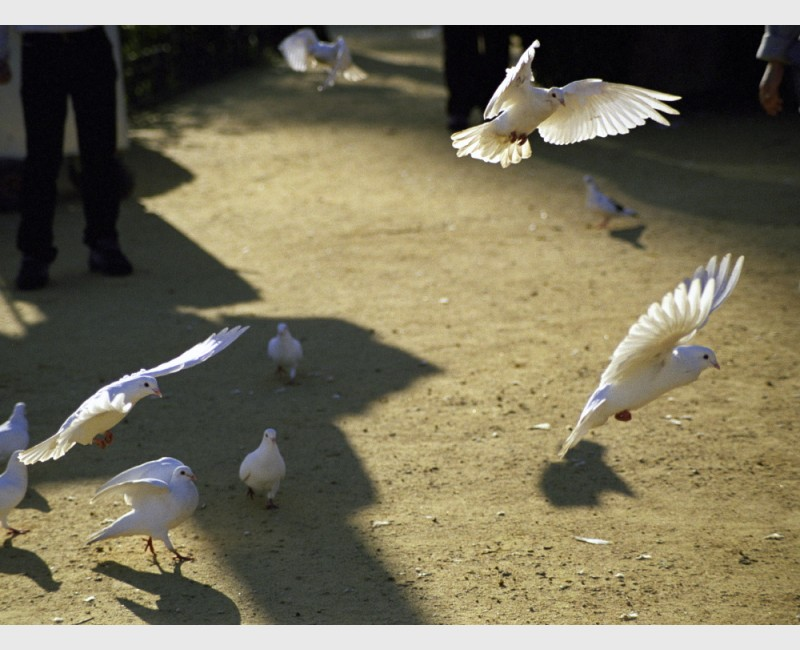 Doves and girl in the park - II - Seville, Spain, 2001