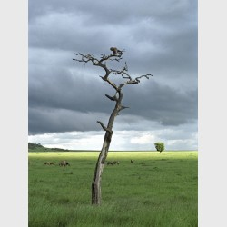 Bird and tree - Kenya, 2006