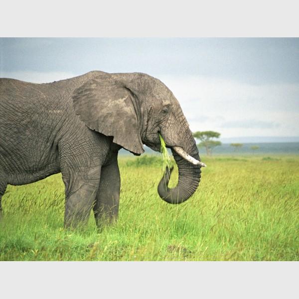 Feeding elephant - Kenya, 2006