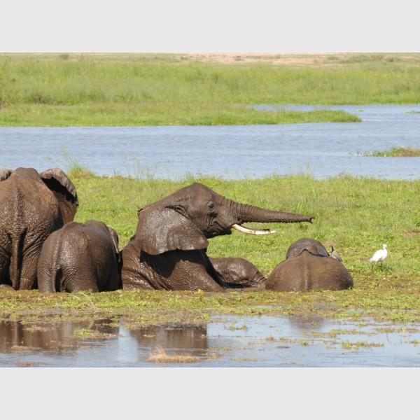 Kenya, 2010