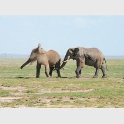 Dust - Kenya, 2010