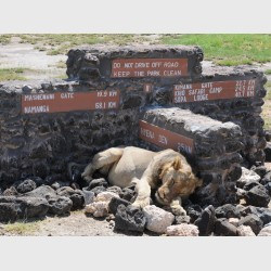 In need of direction - Amboseli, Kenya, 2010