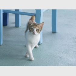 Cat of Patmos - II - Greece, 2012