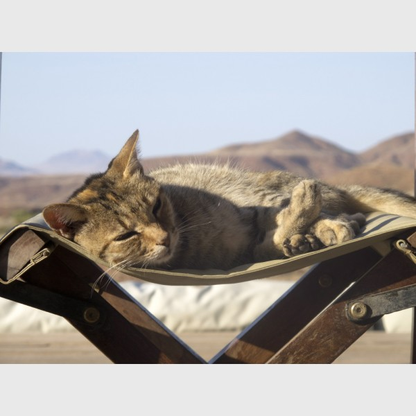 Cat, Damaraland - Namibia, 2012