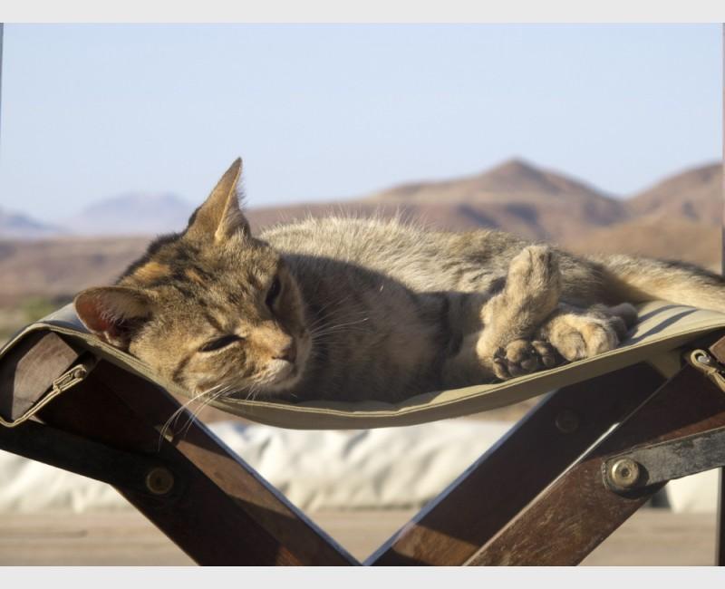 Cat, Damaraland - Namibia, 2012
