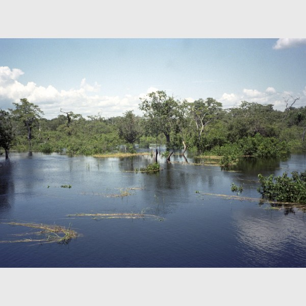 Beautiful waters near Manaus - Brazil, 1996