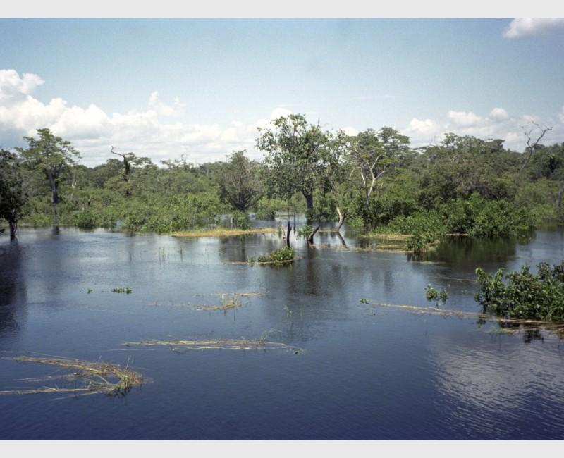 Beautiful waters near Manaus - Brazil, 1996
