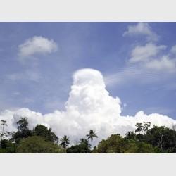 Clouded Taman Negara - Malaysia, 1999