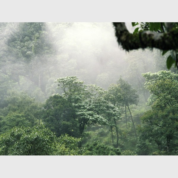 Silver - II - Rainforest landscape, Wayanad, India, 2005