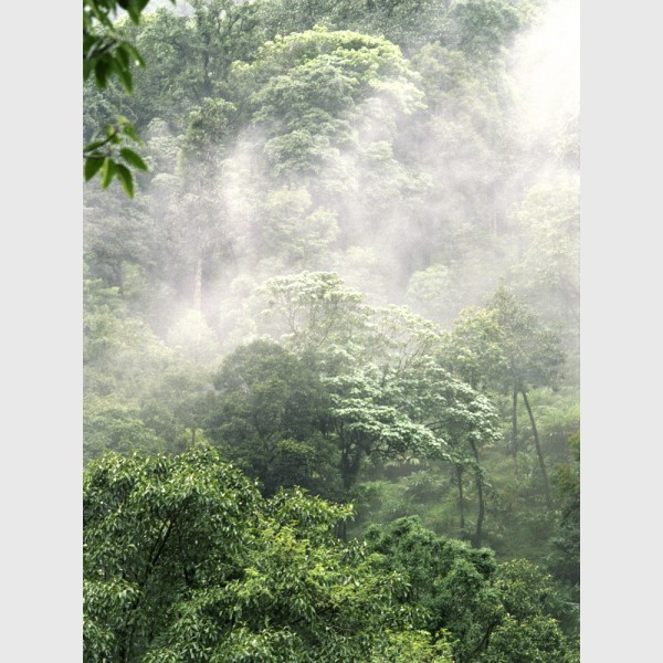 Silver - I - Rainforest landscape, Wayanad, India, 2005