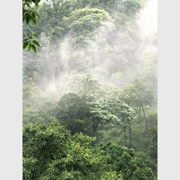 Silver - I - Rainforest landscape, Wayanad, India, 2005
