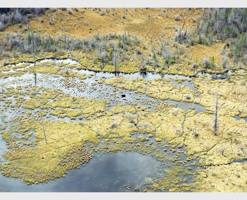Landscape, with moose - Jasper National Park, Canada, 2007