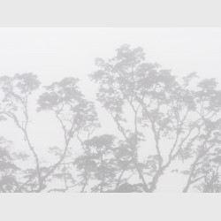 Sierra Caral in morning mist - I - Guatemala, 2009
