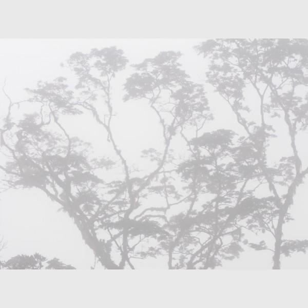 Sierra Caral in morning mist - II - Guatemala, 2009