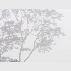 Sierra Caral in morning mist - III - Guatemala, 2009