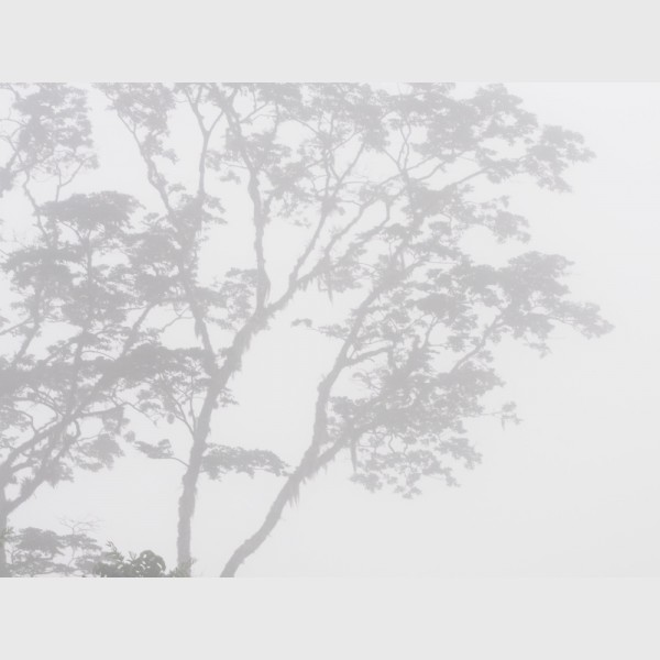 Sierra Caral in morning mist - III - Guatemala, 2009