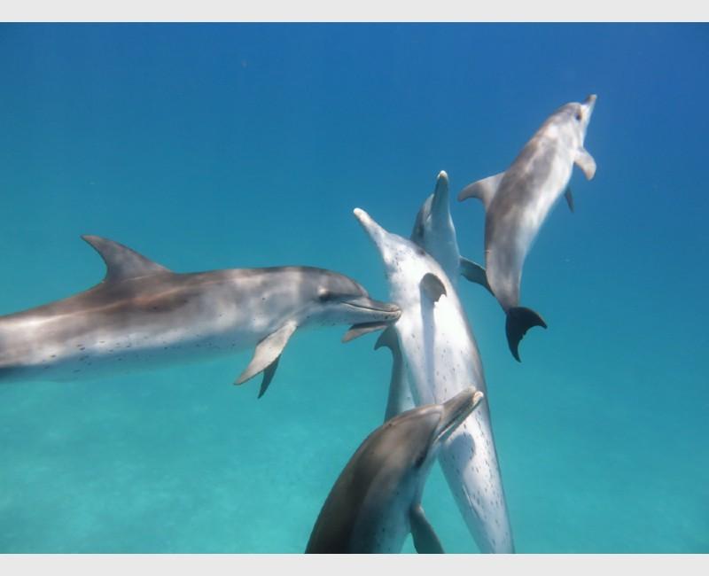 Juveniles at play - Bimini, The Bahamas, July 2014
