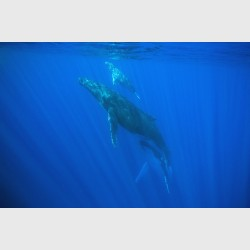 Whale tower - Vava'u, Tonga, August 2014